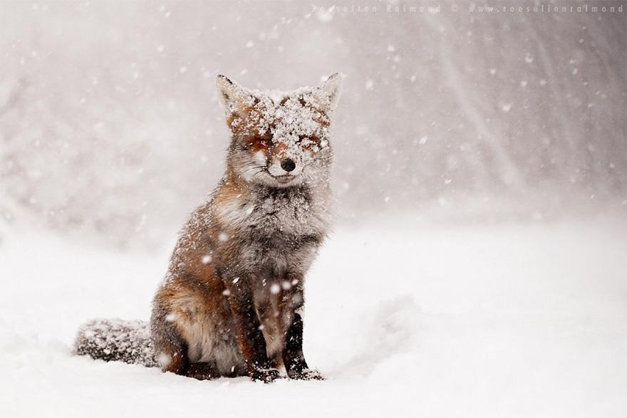 animals-in-winter-5