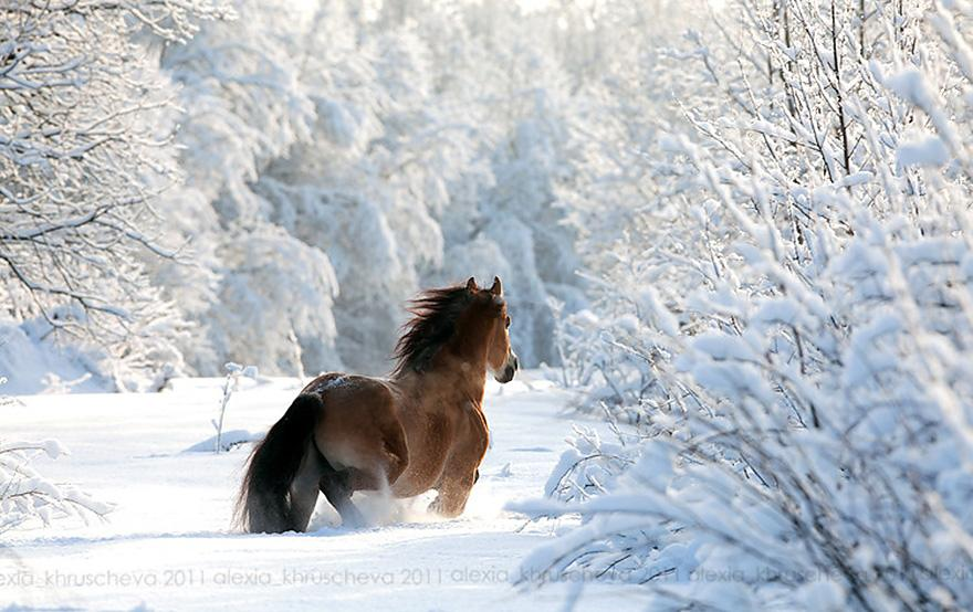 animals-in-winter-8
